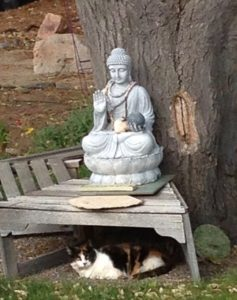 Calico Downloading Buddha
